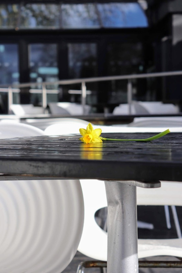 'A Lonely Daffodil' on a table outside Gaucho's restaurant by the Thames in Richmond