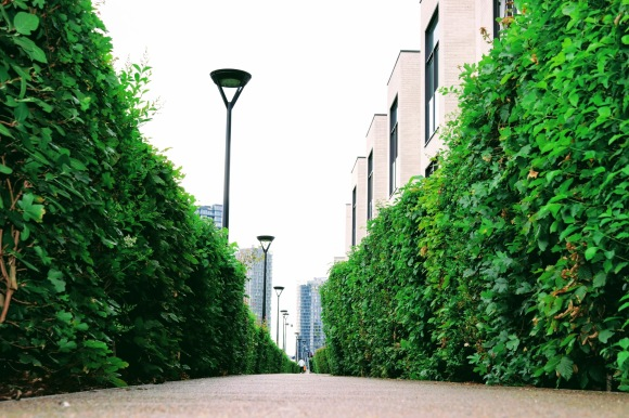 'Green Lane' - a view looking through tall hedges in the former Olympic Village