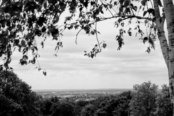 a black and white picture with a treeline in the foreground and an overhanging branch framing a distant view across the Thames to north Kent