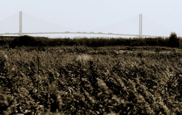 a sepia view of the Dartford road crossing in the background. the picture is dominated by the marshy foreground awash with an array of marsh plants