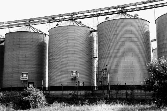 taken in black and white, this is an image of three giant silos, part of a row af many silos on one side of the industrial processing plant