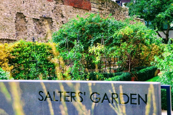 Colour: A view along Salters' Garden with a stone engraved sign in the foreground, the Roman wall in the background, and garden greenery in the middle